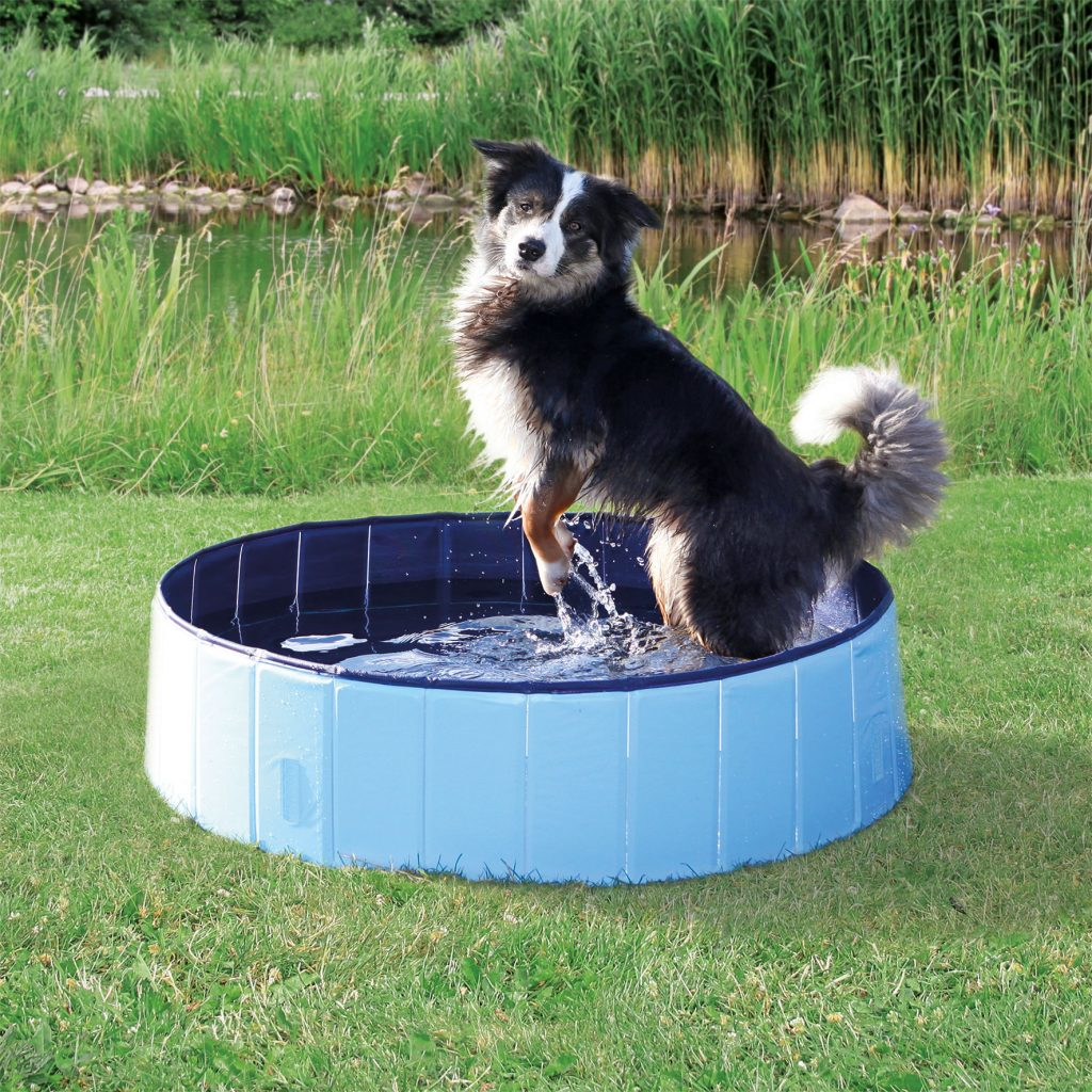 Top 21 Products For Your Pets That Will Make Them Happy